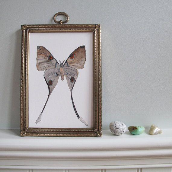 Moth Print  Moon Moth  5 x 7 Fine Art Print of by SNOOGSandWILDE, $10.00: Watercolor Art