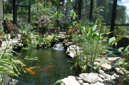 19 best images about lanai garden on pinterest for Koi pond plant ideas