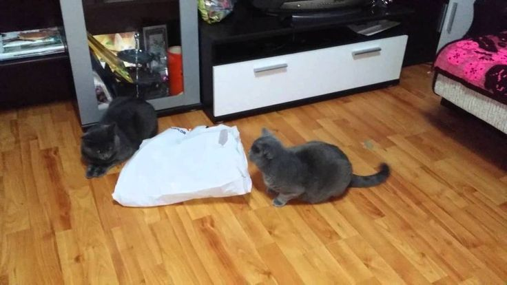 Real funny Cat Fight - You most Watch This :)