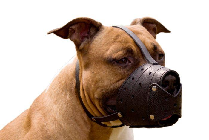 Su perro está ladrando y su vecino le ha dado un ultimátum. O tal vez que haya recibido la notificación de control de animales. En esta etapa, usted está en el extremo del ingenio de cómo se debe manejar el ladrido de su perro. La buena noticia es que hay …