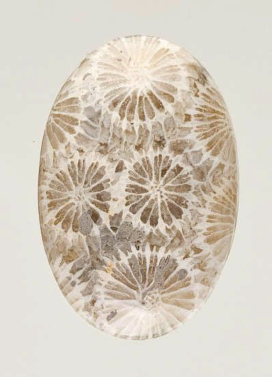 Fossilized coral known as a Petoskey Stone from Lake Michigan