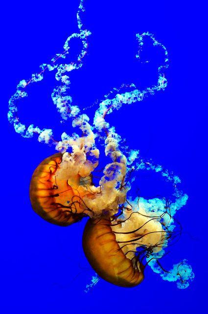 Jellyfish. Stunning.