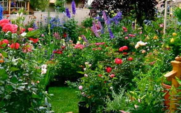 1665 best images about Enjoy Flower gardening on Pinterest