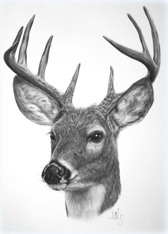 deer artwork - Google Search