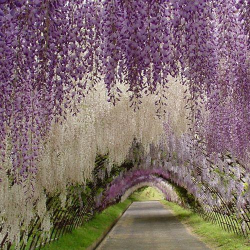 Ashikaga Flower Park in Ashikaga City, Tochigi Prefecture.