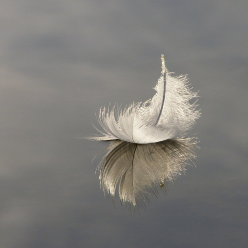 When you see a snow white feather drifting on the breeze. You will know your Angel sent a sign, to put your mind at ease.