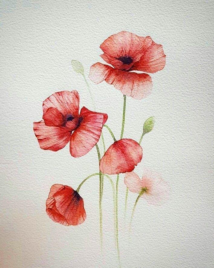 Bild Konnte Enthalten Blume Aquarell Mohnblumen Blumen Malen Aquarellmalerei