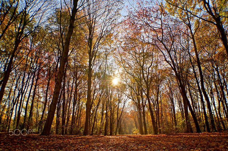 autumn forest by Klaus Vartzbed on 500px