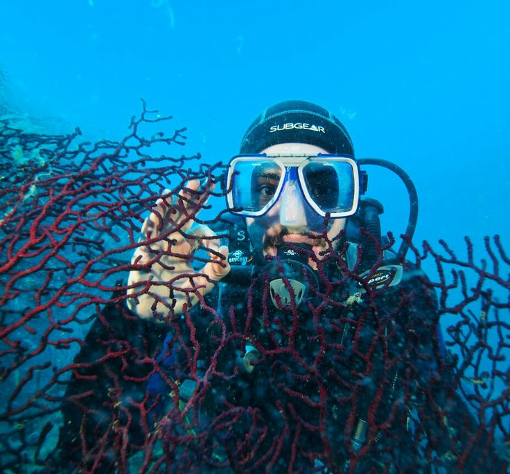 Ayvalık dalış okulu - ida dalış merkezi #scuba #scubadiving #diving #underwater #dalisnoktam #ayvalikdalis #daliskursu #dalış #dalisokulu #dalismerkezi #idadalismerkezi #idadiving #ayvalikida www.idadiving.com