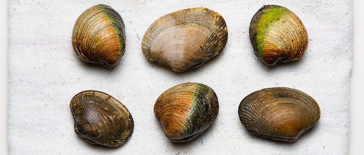 Bivalve basics: A primer (or reminder) on how to shop for, clean and store clams, mussels, oysters and more.