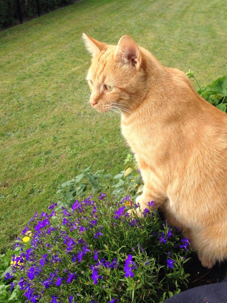 #Katze #Tier  Paddy