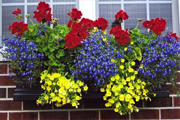 """Секрет роскошного комнатного цветника прост: растения нужно хорошо подкармливать, иначе не дождаться ни пышной листвы, ни хорошего цветения. Жесткая """"диета"""", когда растение длительное время испытывает нехватку питательных веществ, обычно приводит к заболеванию – ведь сил для сопротивления"""