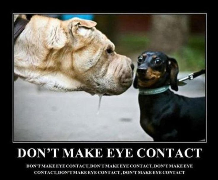 Are Dogs The Only Animal That Makes Eye Contact