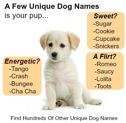 Here's a few funny and unique dog names to name your pup, Find more at... http://www.dog-names-and-more.com/unique-dog-names.html