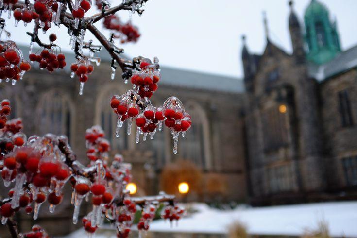 https://flic.kr/p/iwU3YR   Ice Storm Day 2   @University of Toronto