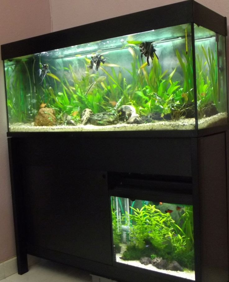 ber ideen zu aquarium einrichten auf pinterest aquarien aquarium und aquarium steine. Black Bedroom Furniture Sets. Home Design Ideas