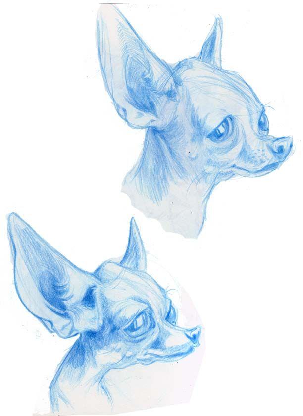 Animal Caricatures No. 12 by SuperStinkWarrior on deviantART