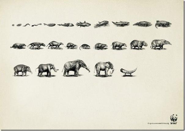 Evolución: El Elefante::..*•#~~$??*