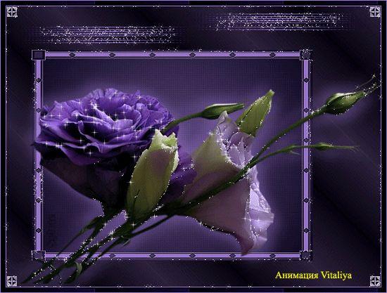 Фиолетовые и белые цветы - открытка цветы картинка анимация блестяшка - Цветы, Анимации, открытки, блестяшки (коллажи, пожелания, поздравления, открытки, в блог, в форум, в соцсети)
