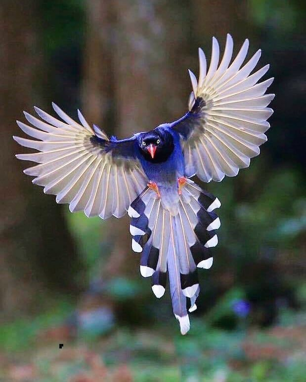 Taiwanese Blue Magpie. DAY FRIENDS Follow us @arts_secret for more! ….