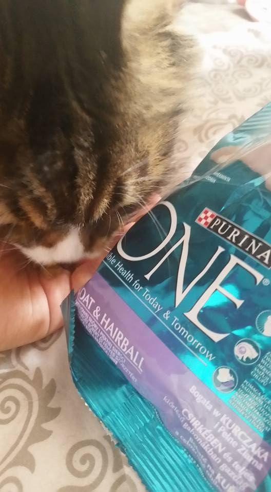 Moje koty są uzależnione od nowej karmy. Nawet największy niejadek nie może sie oprzeć  #PurinaONE #purinaONEadult #wyzwaniePurinaONE https://www.facebook.com/photo.php?fbid=1012766698817081&set=o.145945315936&type=3&theater