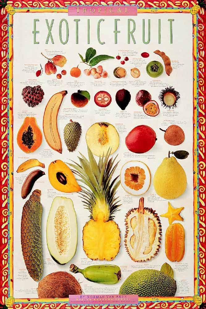 Exotic Tropical Fruit Poster  Yummy mouth is watering