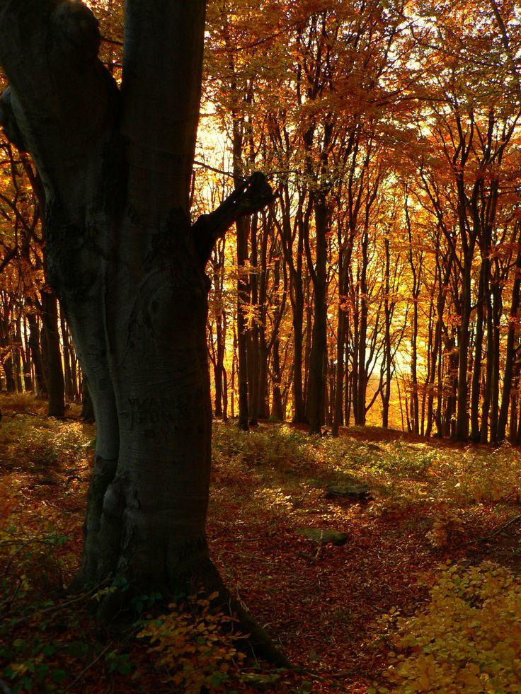 Autumn in Beskidy #polishmountains #beskidy