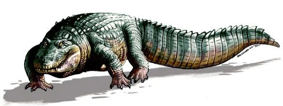 Fossils of two new ancient crocodile species discovered