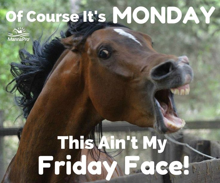 Funny Pictures Quotes Memes Funny: Happy Monday! #funny #horse #sayings