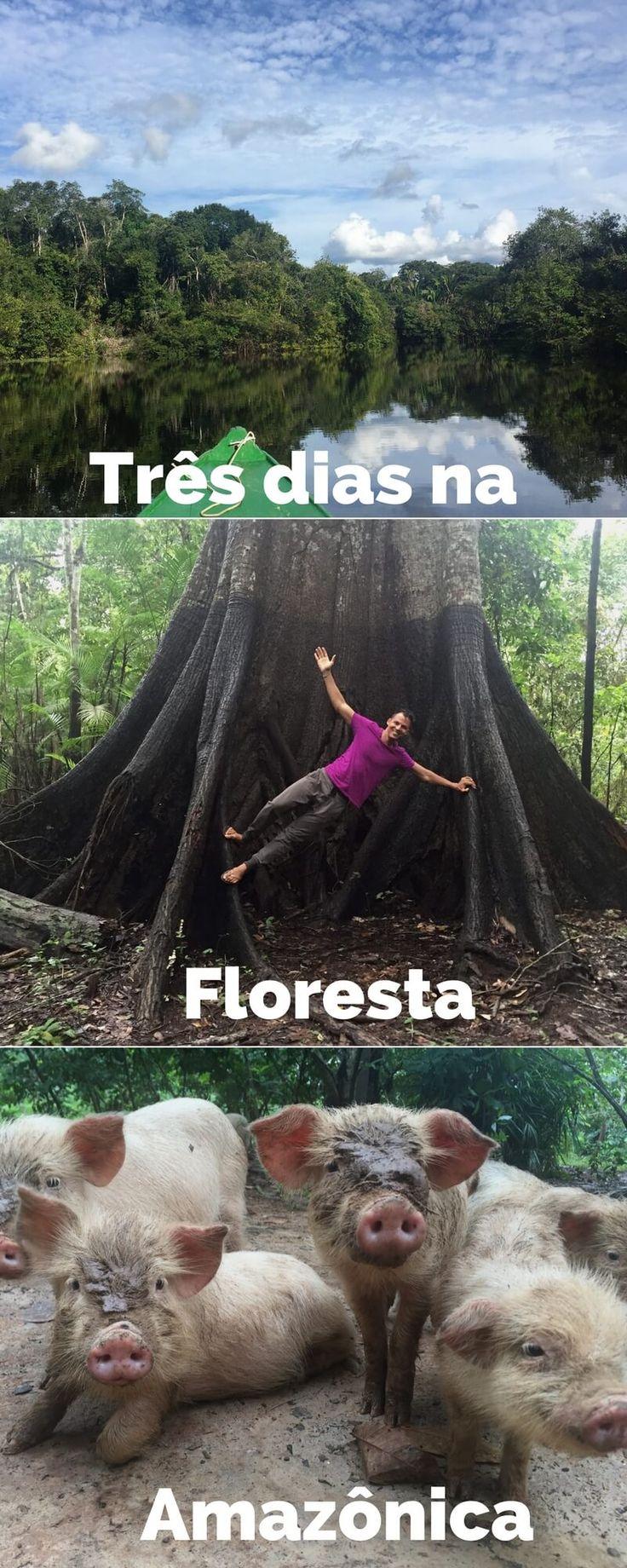 O que fazer na Floresta Amazônica em três dias.