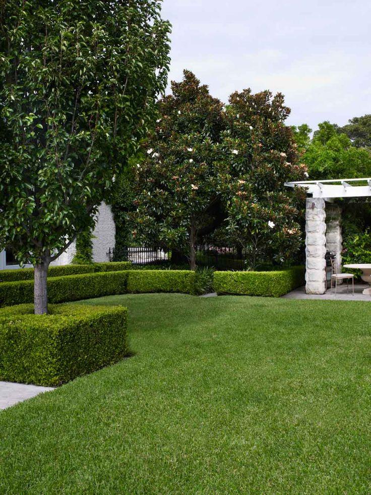 Lawn & Buxus sp. border
