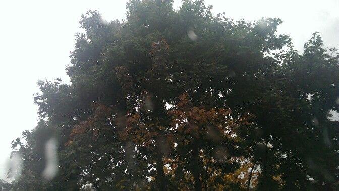 Rain in #London