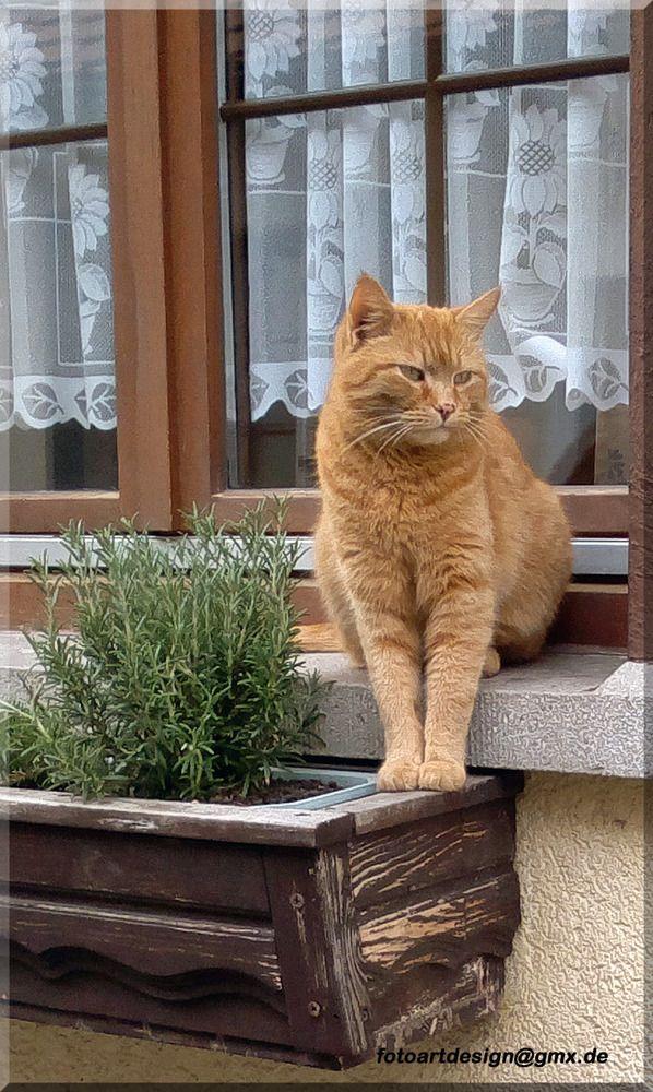Katze am Fenster                                                                                                                                                                                 Mehr