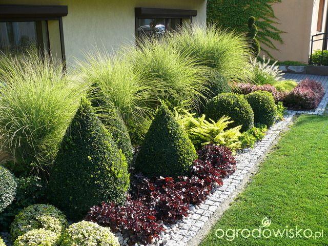Ogród mały, ale pojemny;) - strona 92 - Forum ogrodnicze - Ogrodowisko