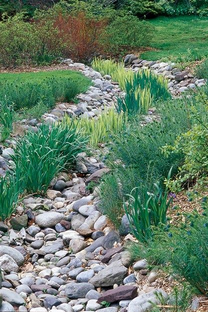 Best 25+ Rain Garden Ideas On Pinterest
