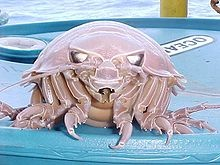 Giant Isopods. Very #weird and #creepy
