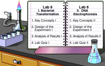 Transformation & DNA Electrophoresis - Lab Bench