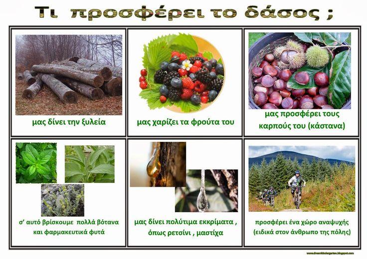 Το νέο νηπιαγωγείο που ονειρεύομαι : Παγκόσμια ημέρα Δασοπονίας - 21 Μαρτίου