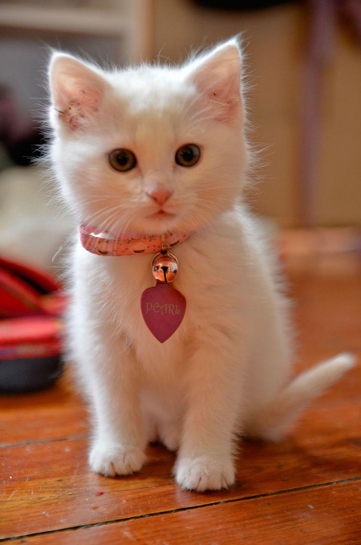 Pearl: The Aristocats, Kitty Cat, Sweet, Pearls, Collars, Kittycat, Animal, White Kittens, White Cat