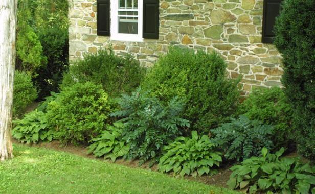 Best 25 evergreen foundation planting ideas on pinterest for Foundation planting plans