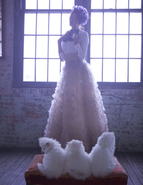 flower cats: Cats, Claire China, Marie Claire, It Was, Amber Gray, Crazy Cat, Kittens, Fashion Editorial, Cat Lady