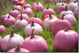 Roze pompoenen