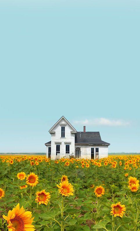 Old Farm House & Sun Flowers