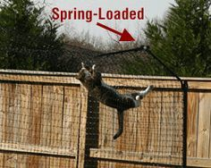 Outdoor Cat Enclosures - Outdoor Cat Enclosure with spring