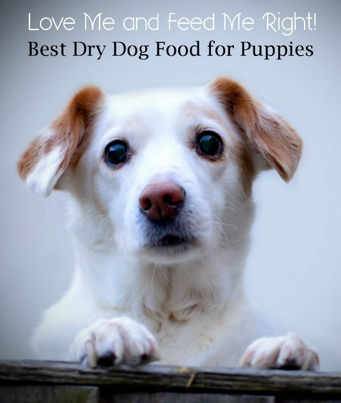 What is the best Dry Dog Food for Your Puppy? | DogVills.com