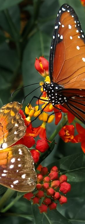 Breathtaking Butterflies