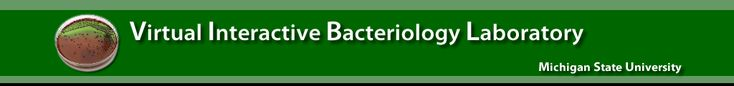 The Gram Stain - Virtual Interactive Bacteriology Laboratory