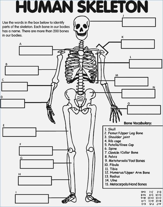 Skeleton Coloring Pages Human Body Unit Human Body Systems