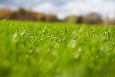 Homemade Grass Fertilizer
