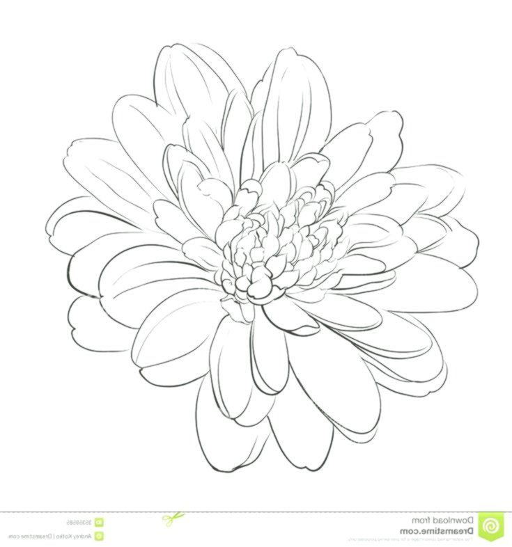 My Mysteries Are Forever Unfolding Forever Mysteries Unfolding Chrysanthemum Drawing Chrysanthemum Tattoo Flower Drawing